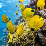 Shopping for Reef-safe Sunscreen